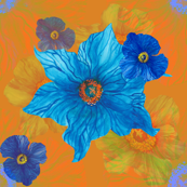 Blue poppy orange