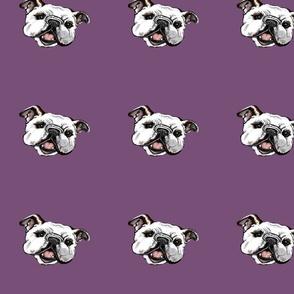 purplebulliehead