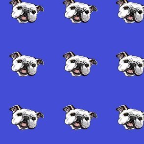 royalblue2bulliehead