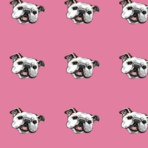 pinkbulliehead