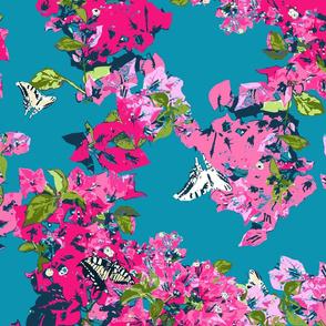 bougainvillea pink blue