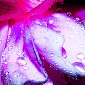 Little_Drops_of_Rain