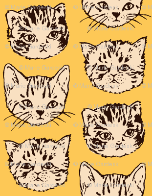 Cute Cats | Orange