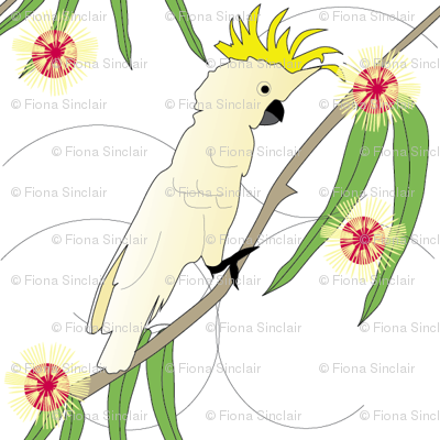 Cockatoo and Pin Cushion Hakea - white