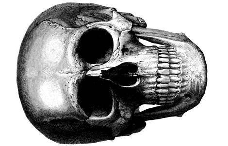 skull 36x 54