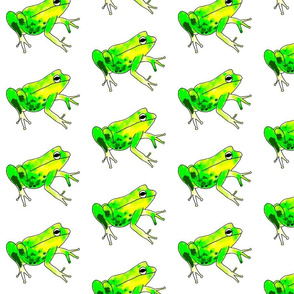 Frogs with white background.