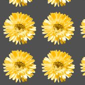 Rdaisyyellow_shop_thumb