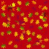 Japanese_maple_autumn_leaves_in_rust_red_shop_thumb