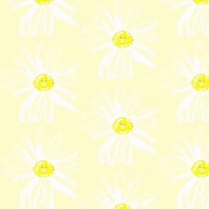 Daisy White-yellow