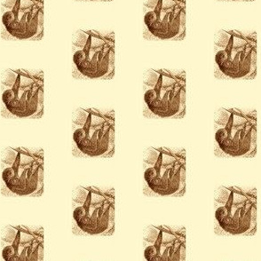 Appealing Sloth