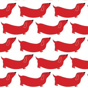 dachshund red white