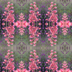 Spring Pinks