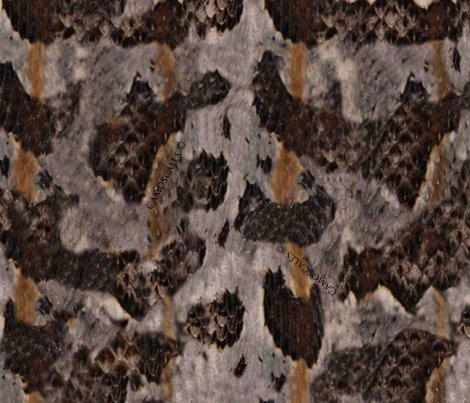 Rrtimber_rattlesnake_print_shop_preview