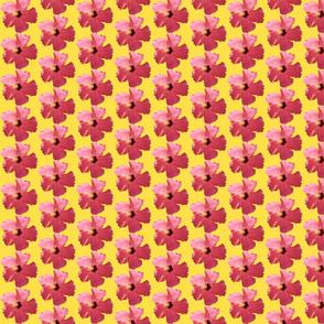 Hibiscus_II