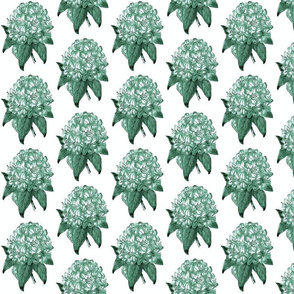 Rhododendron-Green