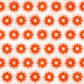 Orange_cushionflower_shop_thumb