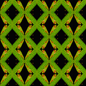 Cahuita Frog BL