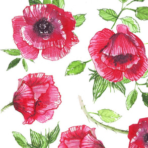 red poppies ink watercolor