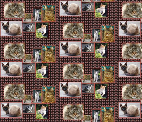 Rcat_collage_shop_preview