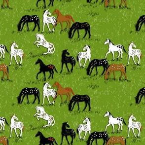 AppleLoosa Horses 2