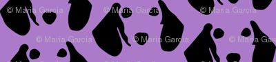 dachshund purple