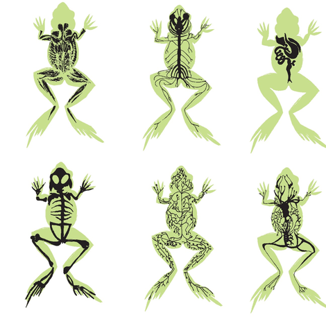 Systems of the Male Frog fabric by boris_thumbkin on Spoonflower - custom fabric