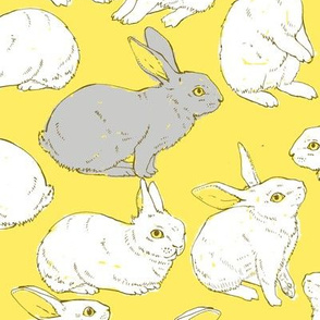 Rabbits in yellow