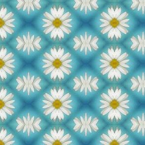 Daisy  - small