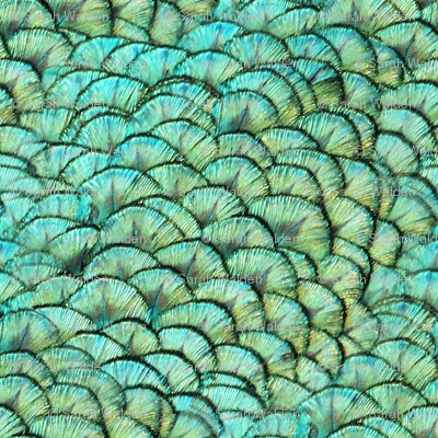 Peacocks Have Fab Pads ~ Reverse