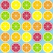 Rcitrus_segment_polka_dot_blue._shop_thumb