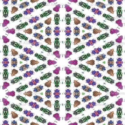 Kaleidoscope Bugs 1