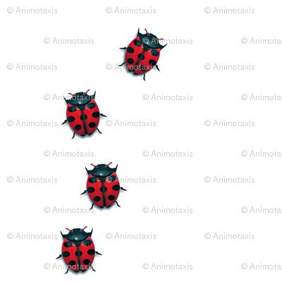 Crawling Ladybugs