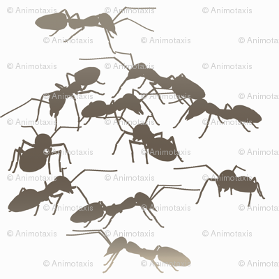 Mocha Ants
