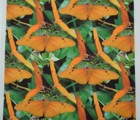 Butterflies love Berries