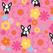 Mod Boston Terriers - Pink