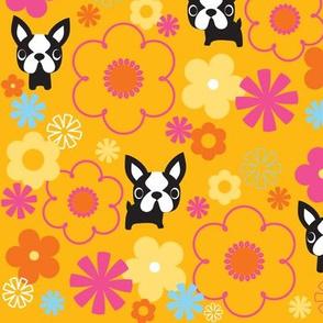 Mod Boston Terriers - Gold