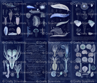 Couvier Biology Plates Inverted