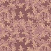 African_visage_lace_orchid_shop_thumb