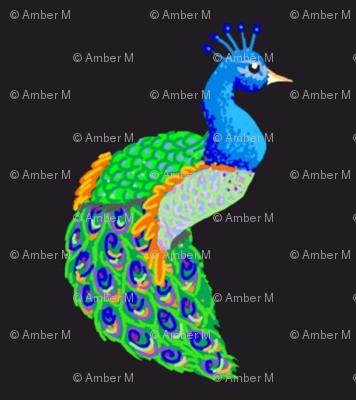 peacocks a plenty
