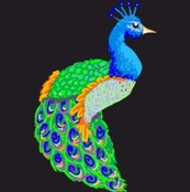 Rcolorpeacock_shop_thumb