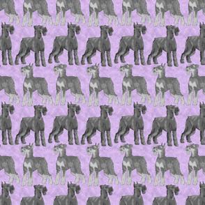 Posing Giant Schnauzers - purple
