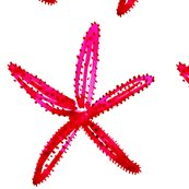 Rcestlaviv_starfish1pinkred_shop_thumb