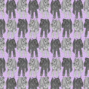 Standing Standard Schnauzers - purple