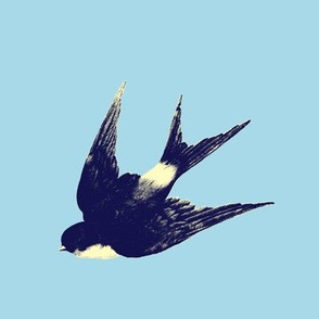 blue_swallow