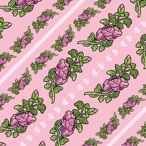 pretty begonias