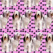 Rbearded_collies_and_paw_prints_pink_shop_thumb