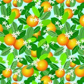 Citrus_fruit_new_adj_shop_thumb