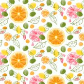 Rrcitrus_slices_002_ed_shop_thumb