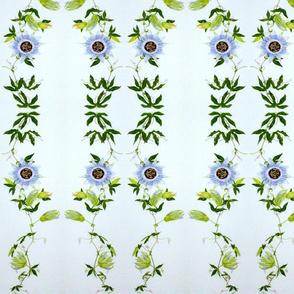 Passiflora Parquet