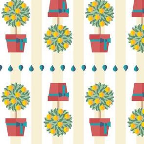 Citrus Topiary